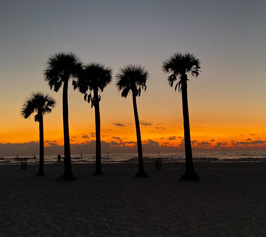 Palm Tree Vacation