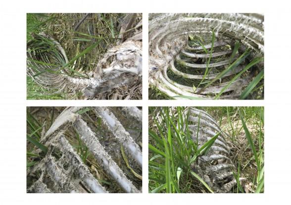 large_spring-quadrant-1