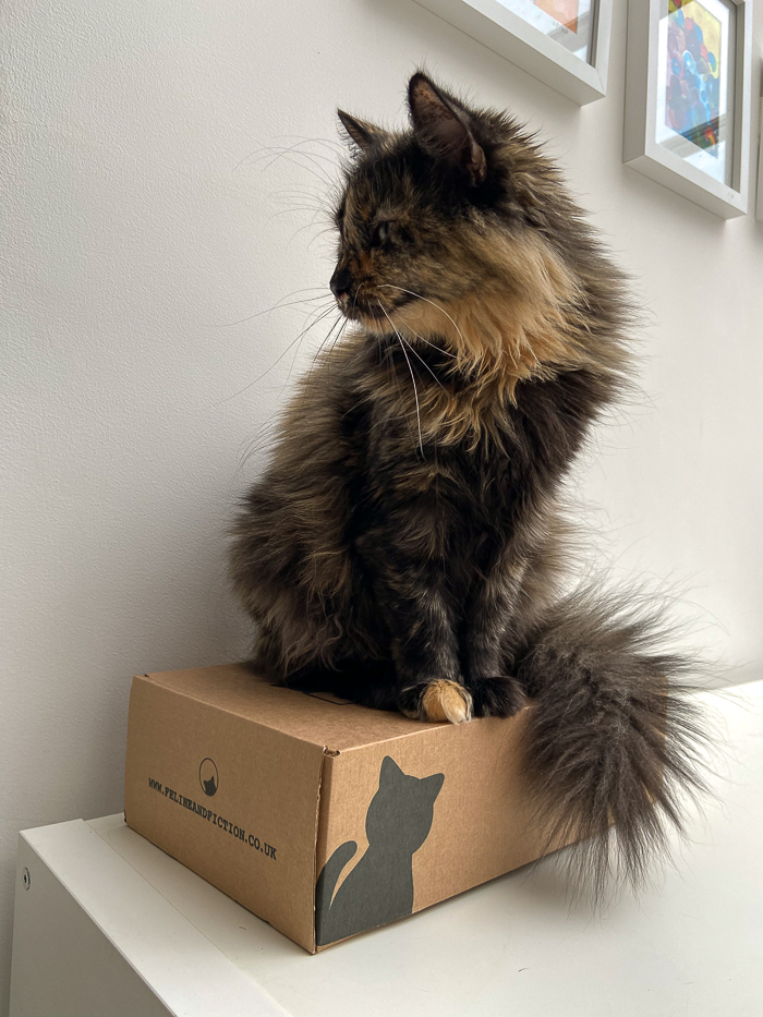 Cat sitting on top of a box