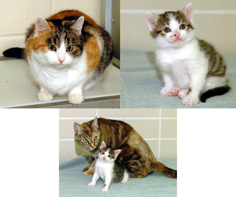 https://i2.wp.com/www.catnews.org/images/cat220.JPG
