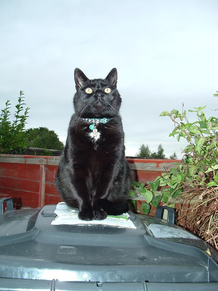 Pippin guarding the bins. Photo by Helen Jackson