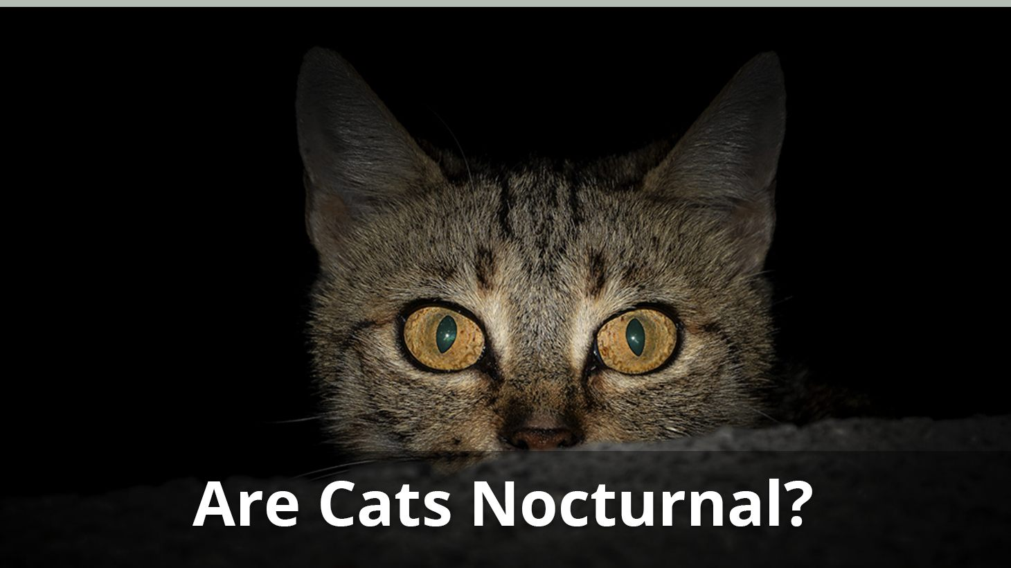 Are Cats Nocturnal How To Get Your Cat To Sleep At Night