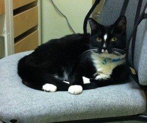 Holmes - Ashley Congdon - Catonsville Cat Clinic Supervisor