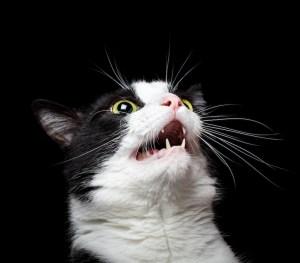 is my cat normal?