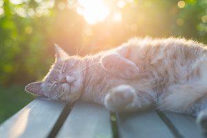 Is your cat sick?