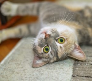 Learn how to keep your indoor cat happy and healthy.