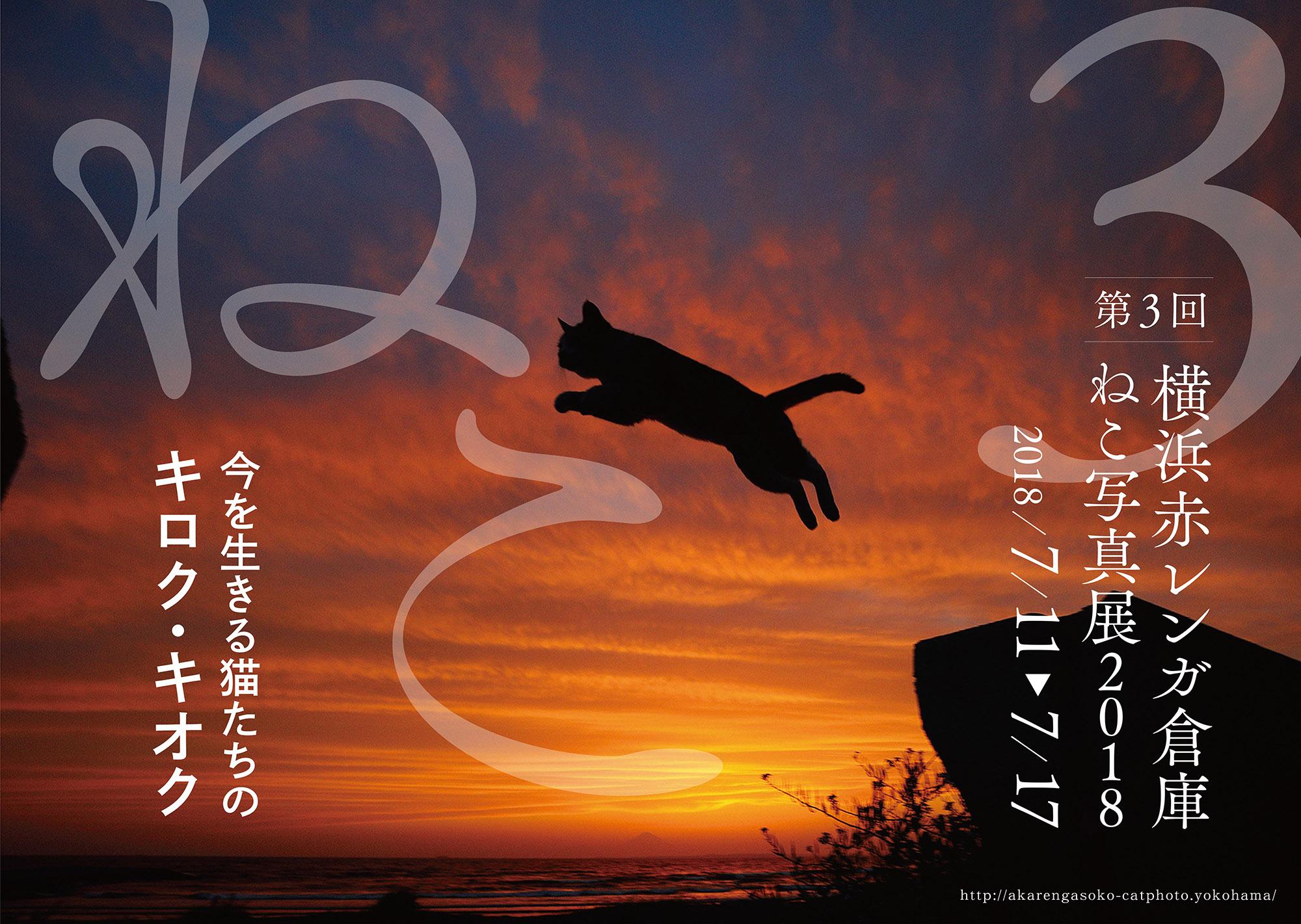 「渋谷ルデコねこ写真展」終了しました。