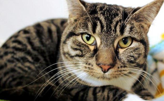 cats protection league, cat rescue