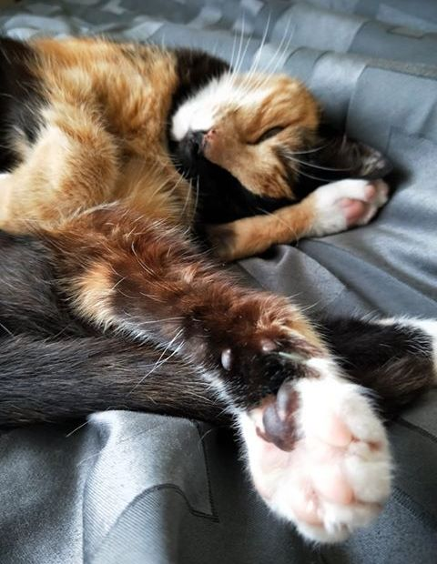 cat sleeping with paws outstretched