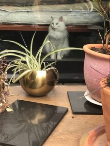 White Fluffy cat sitting in the background. A table with fancy potted plants is in the foreground