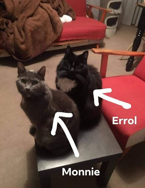 Two cats sitting side by side on the carpet. Image has two arrows drawn onto it telling us that one cat is called Monnie and one is called Errol