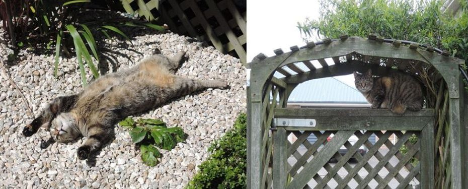 two images, noodle the cat lying on her back, and noodle the cat lying on a garden archway
