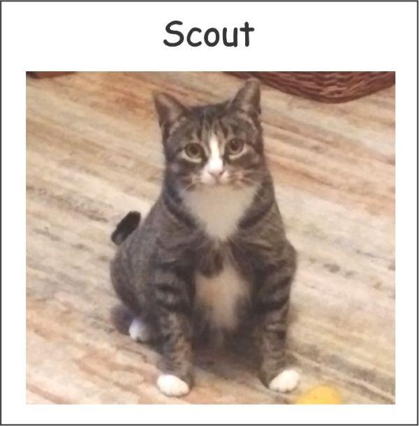 free cat sudbury ontario # 58