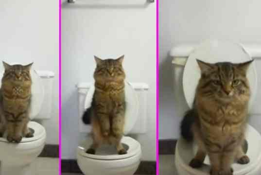cat standing