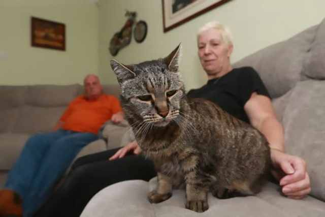 nutmeg-the-cat