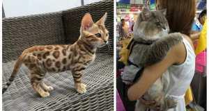 catdogs