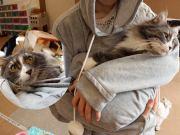 Mewgaroohoodie CAT ACCESSORIES