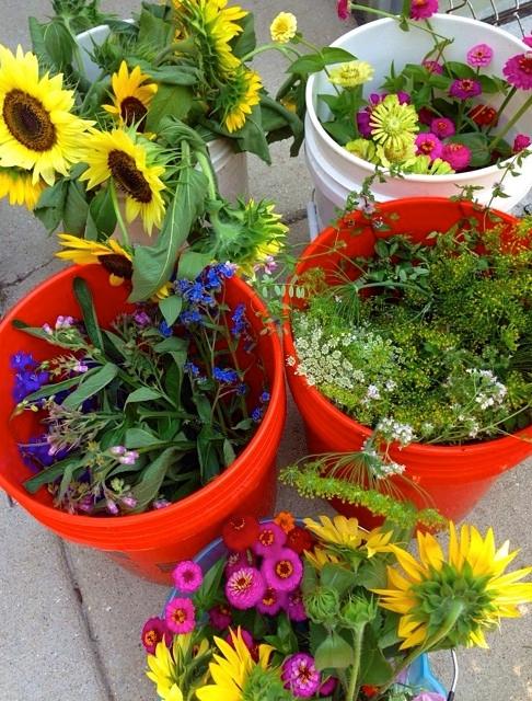 Feral Flowers harvest