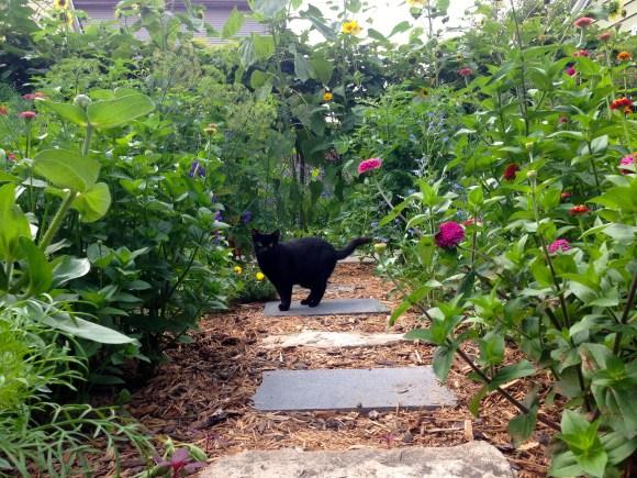 Mooha on the garden path