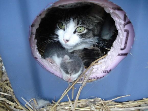 Kittens 6-21-09