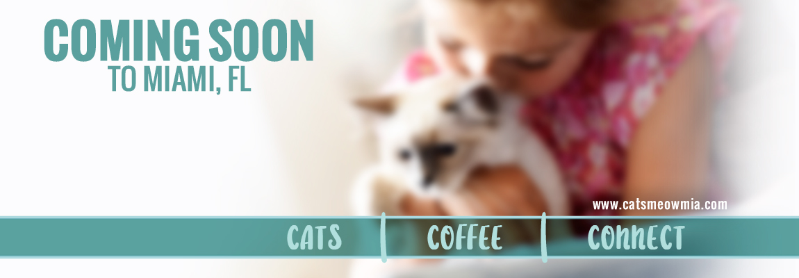 the_cats_meow_FBcover_1150x400