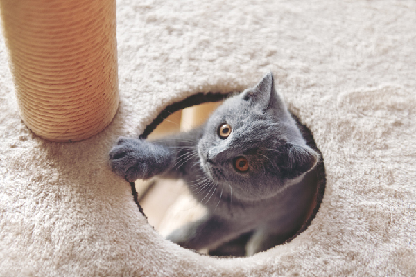 A cat popping out a cat tree.