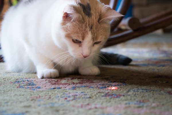 Laser Light Cats