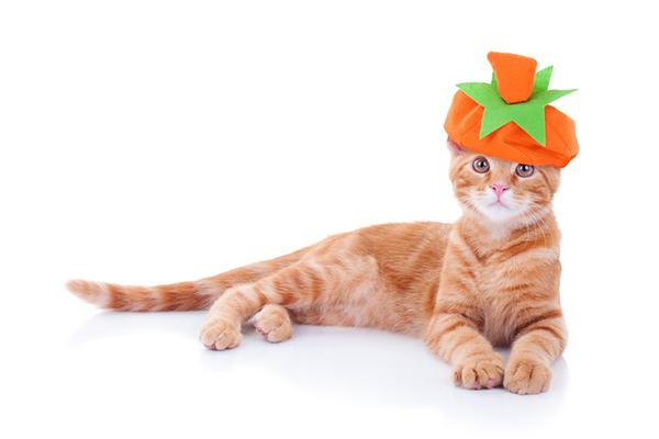 An orange cat with a pumpkin hat costume.