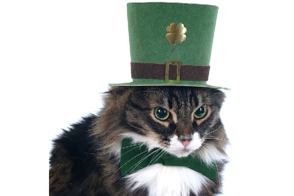 Cat in a leprechaun hat, Irish St. Patrick's Day.