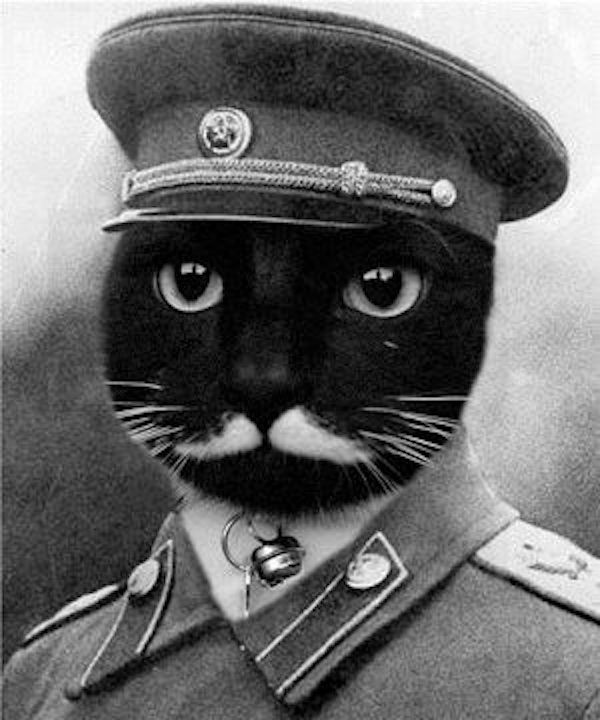 We Interview Stalin The Cat The Latest Supreme Feline Dictator