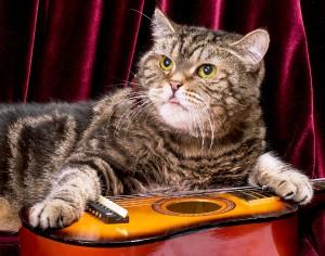 cat guitar studio shutterstock 120705190