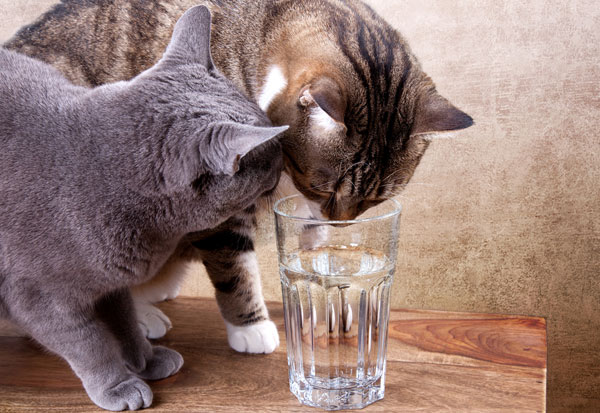 Image result for cats and water