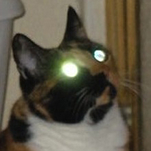 Can Cats See Ghosts Mine Did Catster