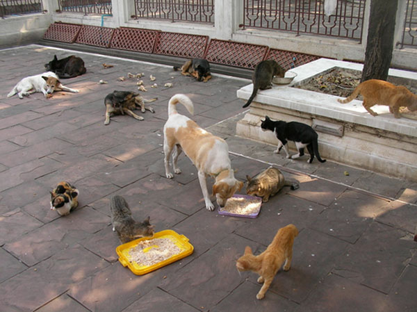 Image result for image of feral dogs and cats