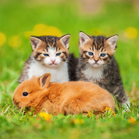 International Rabbit Day Can Cats And Rabbits Live