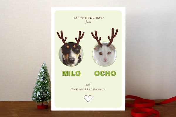 5 Ideas For A Holiday Greeting Card Starring Your Cat