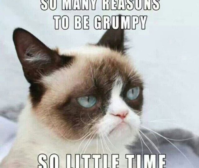 So Many Reasons So Little Time Meme Posted By Fragileheartxxx Grumpy Cat