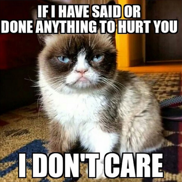 Image result for grumpy cat memes