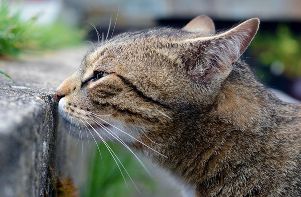 Spraying is a form of communication: broadcasting availability and emotions of the spraying cat