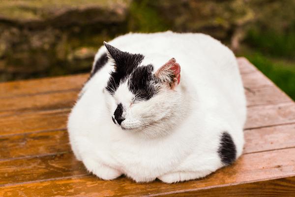 Fat cat sitting.