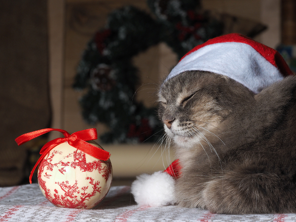 A cat in a Christmas Santa hat sitting with an ornament.