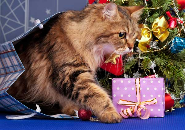Cats often see ribbons on gifts as exciting toys. Siberian cat and Christmas tree by Shutterstock