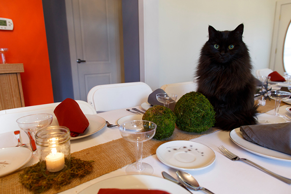 Your cat shouldn't be on your Thanksgiving table, but if you want to share some of your Turkey Day feast, here's what foods are safe for him to eat.