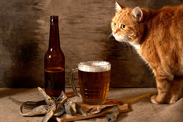 Image result for Keep Alcohol Away from Your Cat