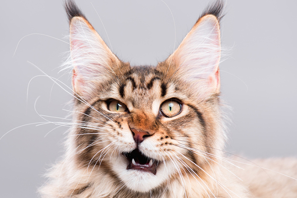 A cat looking funny, surprised or concerned.