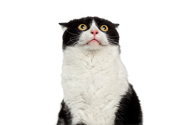 A black and white cat looking shocked and surprised.