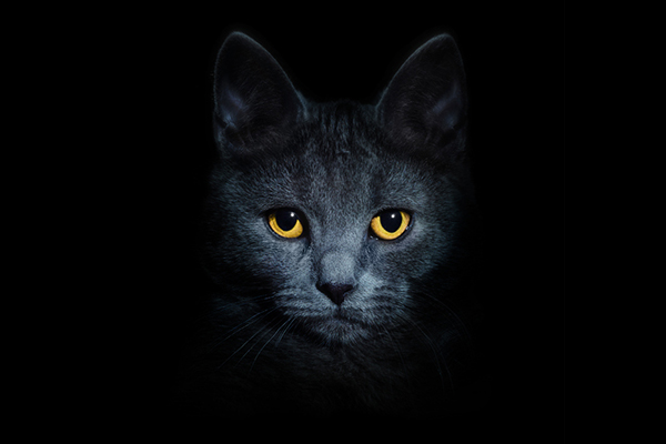 A cat in the dark with glowing yellow eyes.