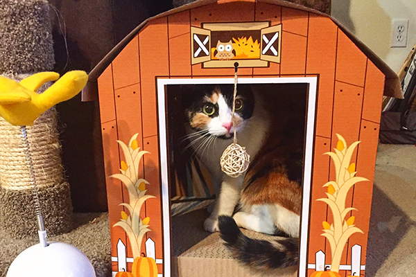 Merritt, just trillin' out in her fallsy cat barn.