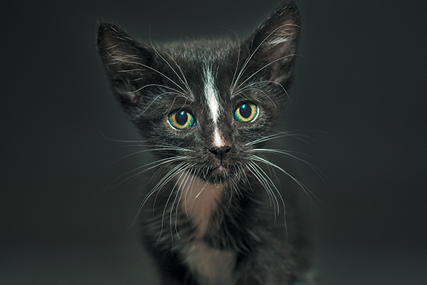 Black Cat Awareness Month —Spike. Photography by Casey Elise Christopher.