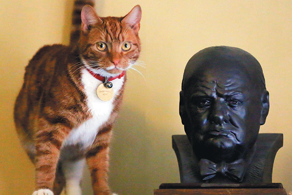 Winston Churchill loved orange tabbies.